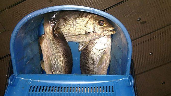 fishing-trip-4